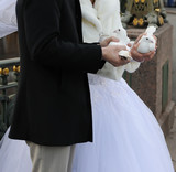 Wedding - Bride, Groom and pigeons