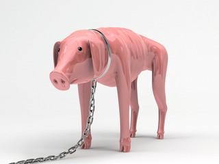 Pig in chains