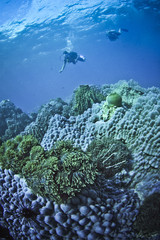 divers over coral reef