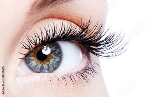 obraz lub plakat Beauty female eye with curl long false eyelashes
