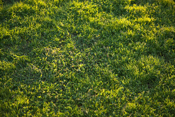 Beautiful Green Grass Background Texture