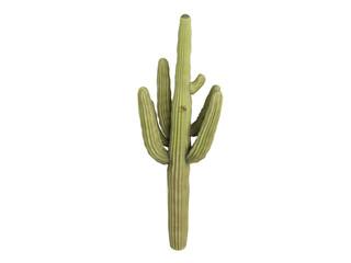 Saguaro_(Carnegiea_gigantea)