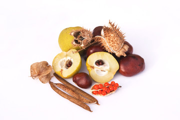 Collection of Autumn seeds and fruits