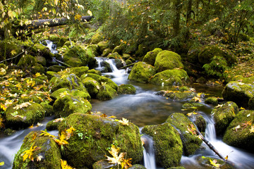 Flowing Water Mountain Stream