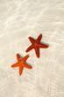 2 sea stars