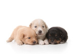 Tired Sweet and Cuddly Newborn Puppies poster