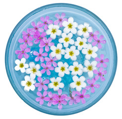 Tiny Flowers Floating in a Bowl
