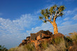 canvas print picture Quiver tree (Aloe dichotoma) landscape, Namibia