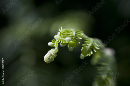 New life from Fern leaf