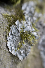 Lichen on rocks Macro