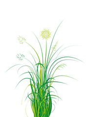 bouquet d'herbe