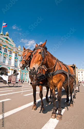 Tourist horses in front of Hermitage Museum, St.Petersburg