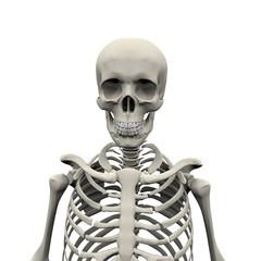 Squelette 10