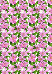 sample_pink_flowers_clematis