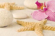 Orchidée et étoiles de mer