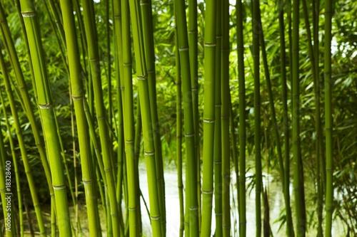 Fototapeten,bambu,grün,wald,pflanze