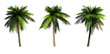 Palms on a white background. 3D art-illustration.