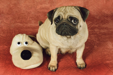 Pug and house slipper as a dog