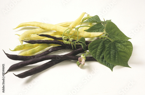 runner beans with blooming vine