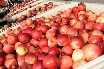 Fresh Red Apples in Farmer's Market