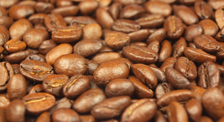 Background made of coffee seeds