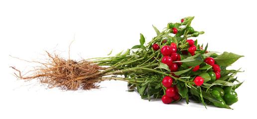 peperoncini rossi con radice