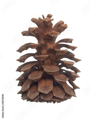 Large pine cone on white