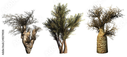 Trees on a white background. 3D art-illustration.