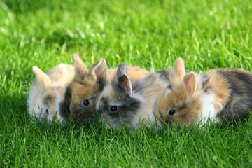 Vier junge Kaninchen