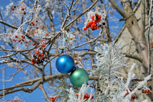 Two balls on a snow-covered rowanberry