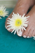 Foot bath with herbs and flowers 4