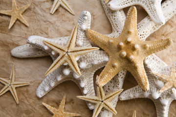 Estrellas de Mar y Paperl Viejo