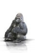 Gorilla wd303