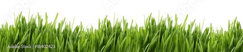 tall grass banner - 18402423