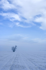 Paesaggio invernale con foschia 4