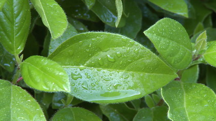 Close up of rain drops on green leaf