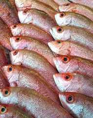 red snapper fishes
