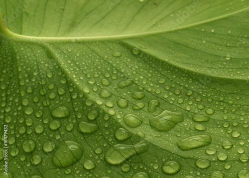 Leinwandbild Motiv New Leaf