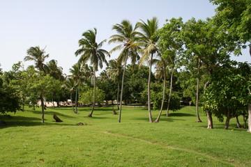 Cayo Levantado - The Bacardi Island