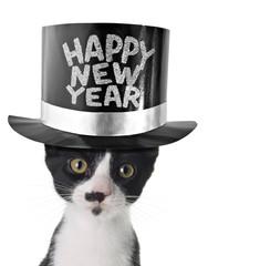 Happy new year kitten