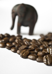 Coffee Elephant