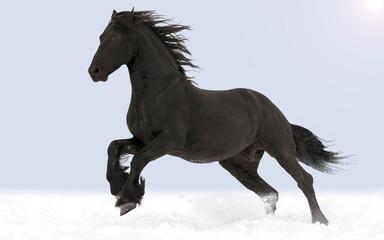 The horse gallops through the snow