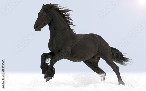 The horse gallops through the snow