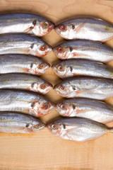 Close up of many fish