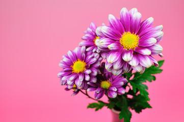 菊とシンプルな背景
