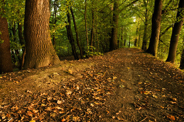 Pathway in forrest