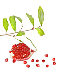 Pomegranate segment and twig  isolated on white background