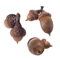 Acorn duplexes isolated