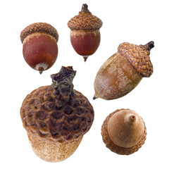 Set of isolated acorns