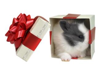 gift in  box